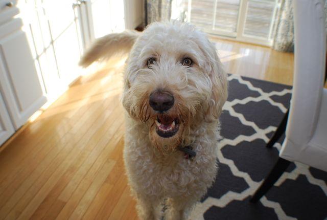 Cooper smile