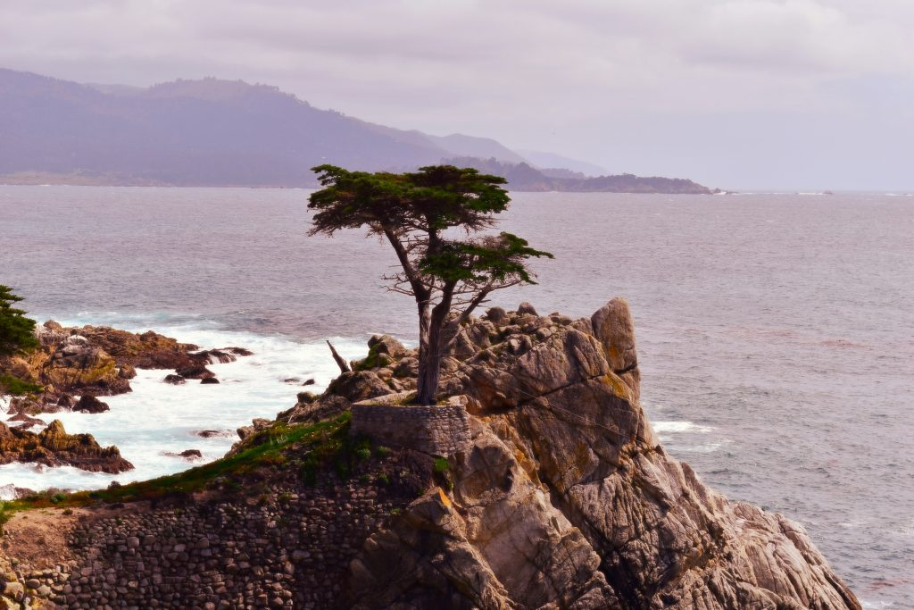 The Lone Cypress - 17-MIle Drive - Pebble Beach, California